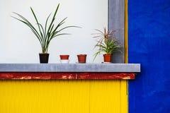 Topfpflanzen mit farbigen Wänden Stockfotos