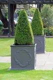 Topiary δέντρα σε δοχείο Στοκ φωτογραφίες με δικαίωμα ελεύθερης χρήσης