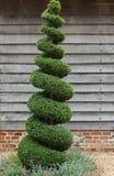 topiary δέντρο Στοκ Φωτογραφία