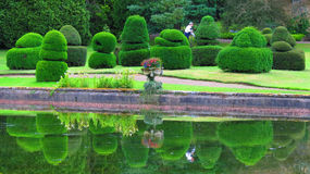 Topiary θάμνοι Yew δενδρολογικών κήπων Thorpe Perrow Στοκ φωτογραφία με δικαίωμα ελεύθερης χρήσης