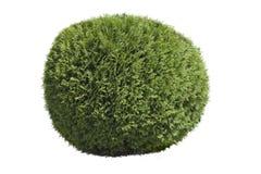 Topiary θάμνος Στοκ εικόνα με δικαίωμα ελεύθερης χρήσης