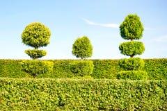 Topiary πράσινα δέντρα με το φράκτη στο υπόβαθρο διακοσμητικό garde Στοκ εικόνα με δικαίωμα ελεύθερης χρήσης