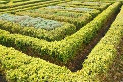 topiary изгороди сада Стоковое Изображение