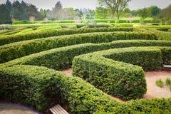 topiary лабиринта Стоковое Фото