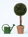 topiary сада Стоковые Изображения