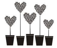 topiary сердца Стоковые Фото