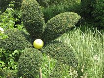 topiary photos stock