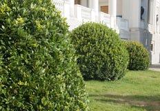 topiary Arkivbilder