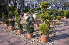 topiary Royaltyfri Foto