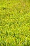 Topiary Стоковые Изображения