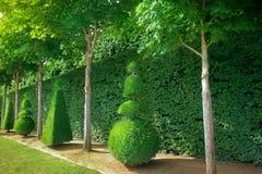 Topiary Royaltyfri Fotografi