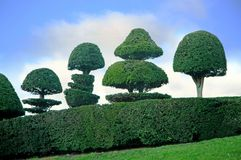 Topiary Obrazy Stock