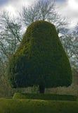 topiary Royaltyfri Bild