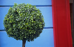 Topiary Foto de Stock Royalty Free