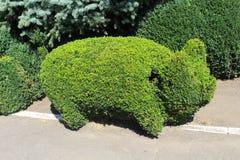 topiary Стоковое Изображение
