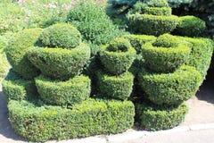 topiary Стоковые Фотографии RF