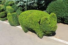 topiary Стоковое фото RF