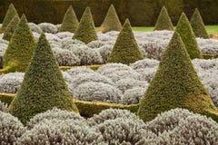 Topiary aguzzo Immagini Stock
