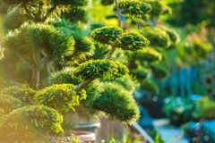 Topiary Art Garden Plants Arkivbilder