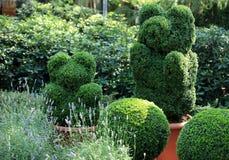 Topiary av trädgården Royaltyfria Bilder
