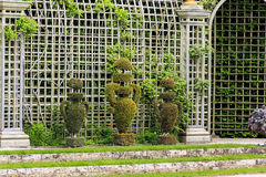 Topiary in bosquets Stock Photography