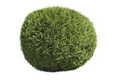 Topiary bush Royalty Free Stock Image
