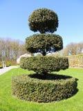 Topiary cijfer van een gedrongen hulst Regelmatig park stock afbeelding