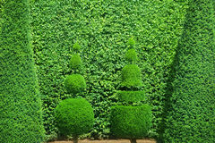 Topiary Stock Image