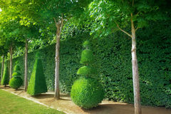 Topiary trees Royalty Free Stock Photography