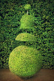 Topiary tree Stock Images