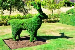 Topiary Deer from an English Garden. A green topiary reindeer, in an English garden with apple trees Stock Photography