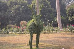 A eye catching green topiary of deer in a garden. stock image