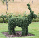 Topiary della renna Immagine Stock Libera da Diritti