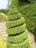 Topiary do Twirl fotos de stock royalty free