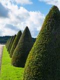 Topiary drzewa Zdjęcie Stock