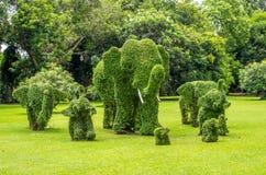 Topiary elefanter som klippas ut ur buskar Fotografering för Bildbyråer