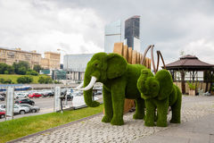 Topiary of elephants in Moscow International Business Center Stock Photos