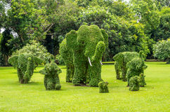 Topiary, elephants trimmed out of shrubs. Bang Pa-in, Ayutthaya, Thailand - July 07, 2013 : Interesting Topiary work on the grounds of Bang Pa-In Royal Palace Stock Image