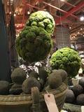 Topiary en el mercado de París Fotos de archivo libres de regalías