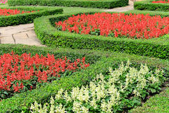 Topiary in an English Formal Garden Stock Image