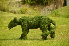 Topiary figure of a lioness. With Christmas lights Royalty Free Stock Photo