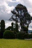 Topiary Garden Cemetery, Ecuador Stock Image