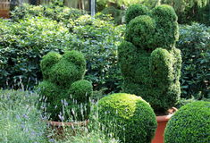 Topiary garden Royalty Free Stock Images