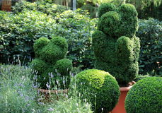 Topiary  of the garden Royalty Free Stock Images