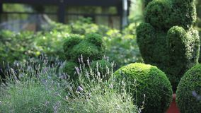 Topiary  of the garden Royalty Free Stock Photography
