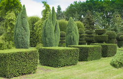 Topiary in the garden. Topiary in the summer garden Stock Image