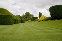 Topiary hedges and lawn