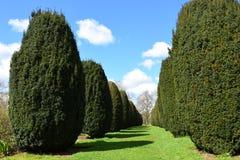 Topiary, Hinton Ampner House en Tuin, Hampshire, Engeland royalty-vrije stock afbeeldingen