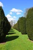 Topiary, Hinton Ampner House och trädgård, Hampshire, England Royaltyfri Bild