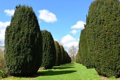 Topiary, Hinton Ampner House und Garten, Hampshire, England lizenzfreie stockbilder